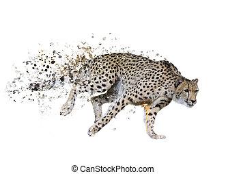 (acinonyx, gepard, aquarell, jubatus)