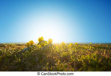 aconite, cedo, primavera, inverno, céu azul