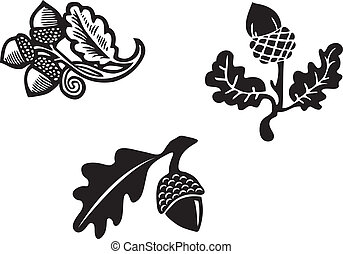 Acorn graphic illustration, vector
