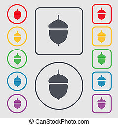 Acorn icon sign. symbol on the Round and square buttons with frame.