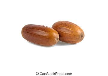 acorn isolated on white background