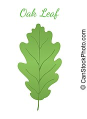 Acorn leaf, oak nut, seed. Cartoon flat style. Vector illustration