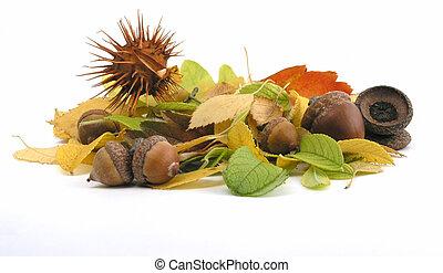 acorn - OLYMPUS DIGITAL CAMERA          fall: acorn