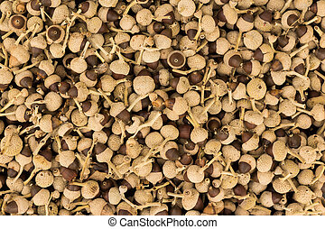 Acorn Shape Seeds