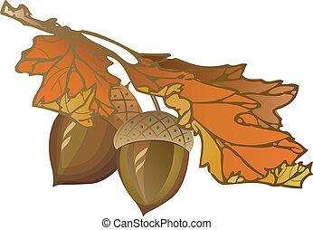Acorn - Fall oak acorn, vector illustration