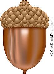 acorn - vector illustration of acorn on white background