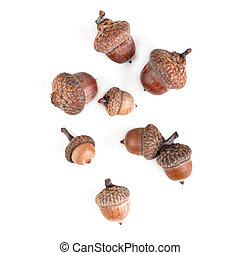 acorns of different size, top view, isolated, on white background