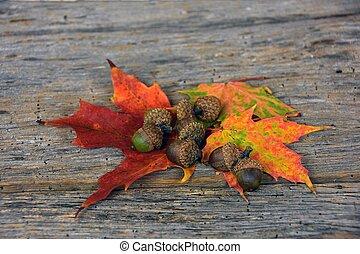 acorns on maple leaves