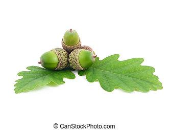 acorns on oak leaves on white background