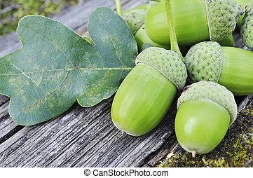 Acorns - Oak acorns and leaves on grunge wooden background