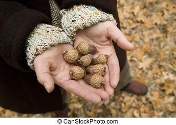 acorns - womans hands holding black oak acorns