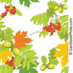 Acorns, rowan and maple leaves