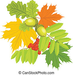 Acorns, rowan and maple leaves isolated on the white. Vector illustration
