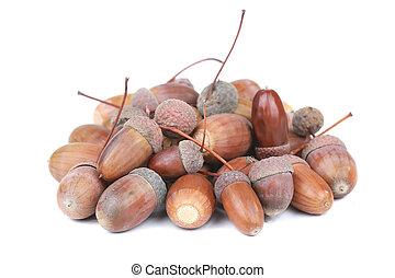 acorns on a white background