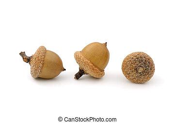 Acorns - Close-up of three dried acorns on white background