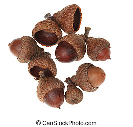 Acorns - Upper view of a heap of acorns against a white...