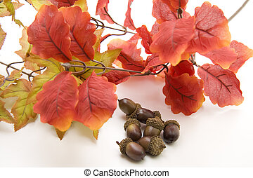 Acorns with autumn branch