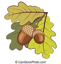 Acorns with leaves