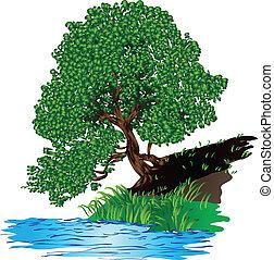 acqua, albero