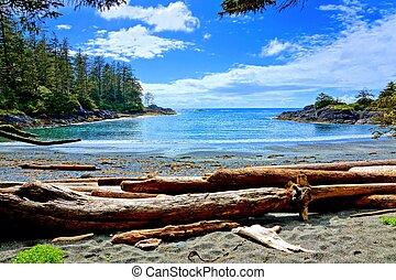 acqua blu, e, cieli, lungo, il, costa, di, orlo pacifico parco nazionale, isola vancouver, bc, canada
