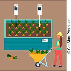 acqua, crescente, sistema, automatico, carriola, carote, controllo, processo, pieno, contadino