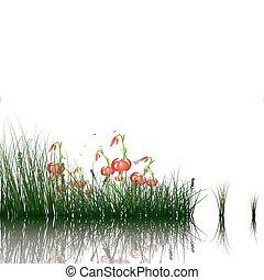 acqua, erba