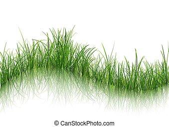 acqua, erba, riflessione