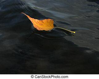 acqua, foglia autunno, surface., giallo