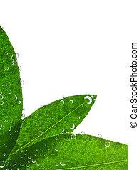 acqua, foglie, verde