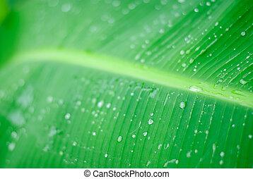 acqua, fresco, isolato, verde, gocce, foglia, bianco