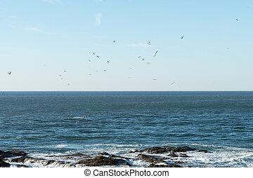 acqua, mosche, sopra, gabbiani, ricerca, pietre, rottura, mentre, onde, gregge, fish