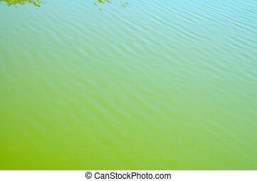 acqua, piccolo, verde, superficie, onde