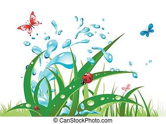 acqua, schizzo, erba
