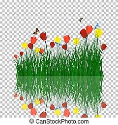 acqua, tulips, erba, riflessione
