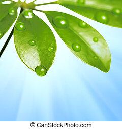 acqua, verde, gocce, foglia, fresco