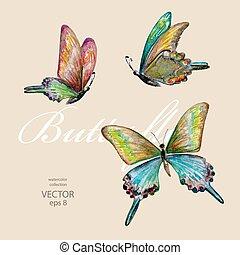acquarello, butterflies., volare, pittura, collezione