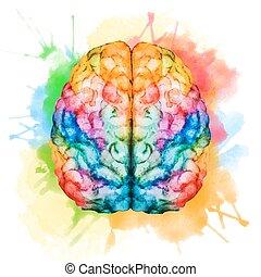 acquarello, cervello
