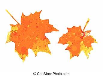 acquarello, foglie, acero