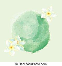 acquarello, frangipani, fiori, fondo