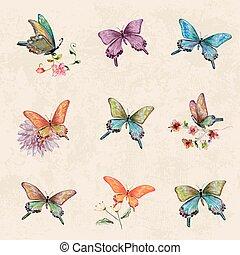 acquarello, vendemmia, pittura, collezione, butterflies.