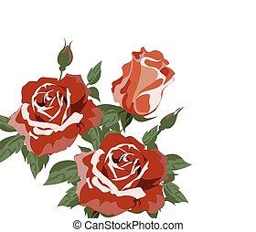 acquarello, vendemmia, rose