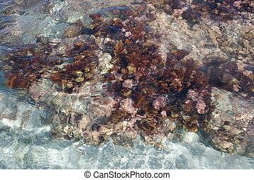 Acquatic flora in Bidderosa Oasi, Sardinia, Italy