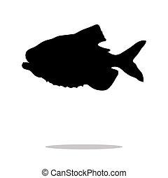 acquatico, silhouette, fish, piranha, nero, animale