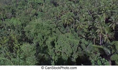 acres of land replete with full grown coconut trees. Drone...