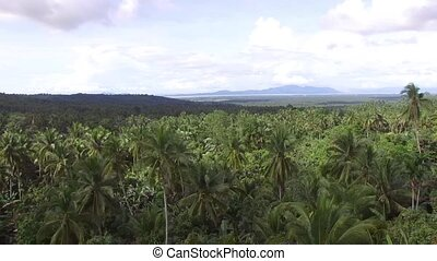 acres of mountainous land replete with coconut trees. drone...