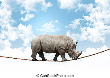acrobata, rinoceronte