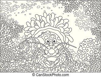 actinia, diogenes-crab