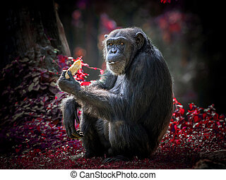 Action of a chimpanzee