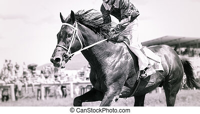 action, portrait, courses chevaux