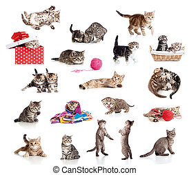 Active kittens collection. Little funny cats isolated on...